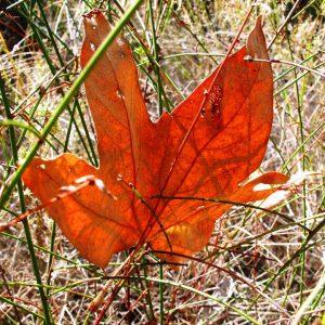 Leaf Blown Away
