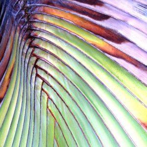 Relentless Palm