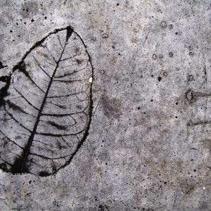 Leaf Imprint III